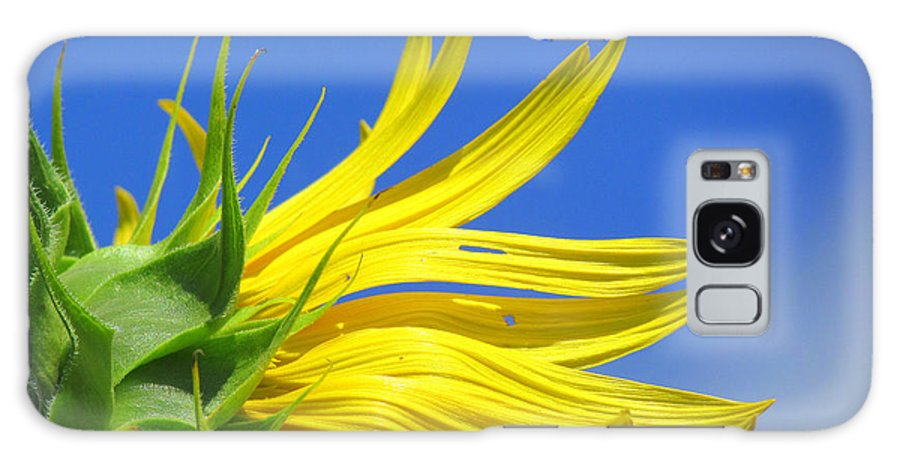 Sunflowers Galaxy S8 Case featuring the photograph Waving Goodbye To Summer by Lori Pessin Lafargue