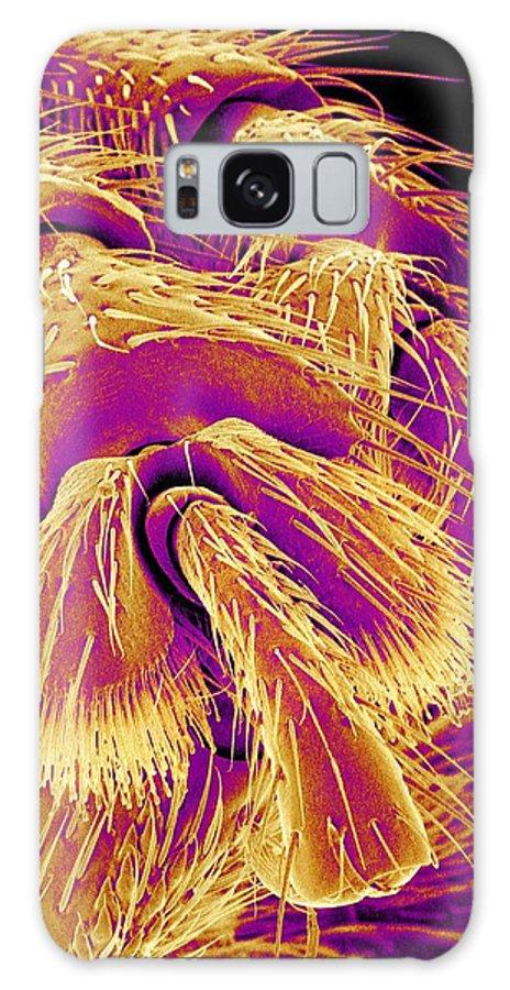 Animal Galaxy S8 Case featuring the photograph Weevil Leg, Sem by Susumu Nishinaga