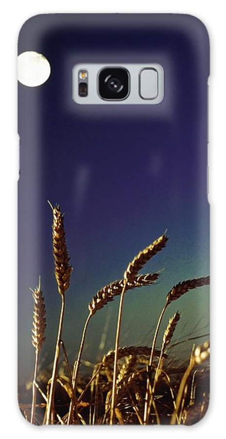 Crop Galaxy S8 Case featuring the photograph Wheat Field At Night Under The Moon by The Irish Image Collection
