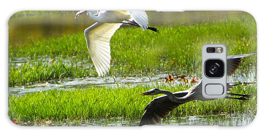 Egrets Galaxy S8 Case featuring the photograph White And Grey Herons In Flight by Diana Haronis