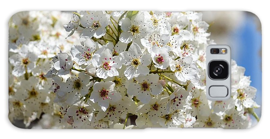 White Galaxy S8 Case featuring the photograph White Flowering Tree Floral by P S