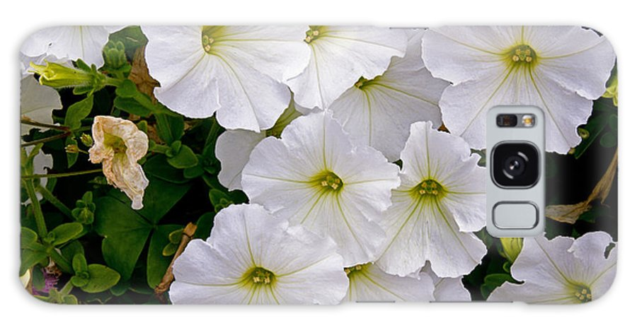 Flowers Galaxy S8 Case featuring the photograph White Flowers by David Freuthal