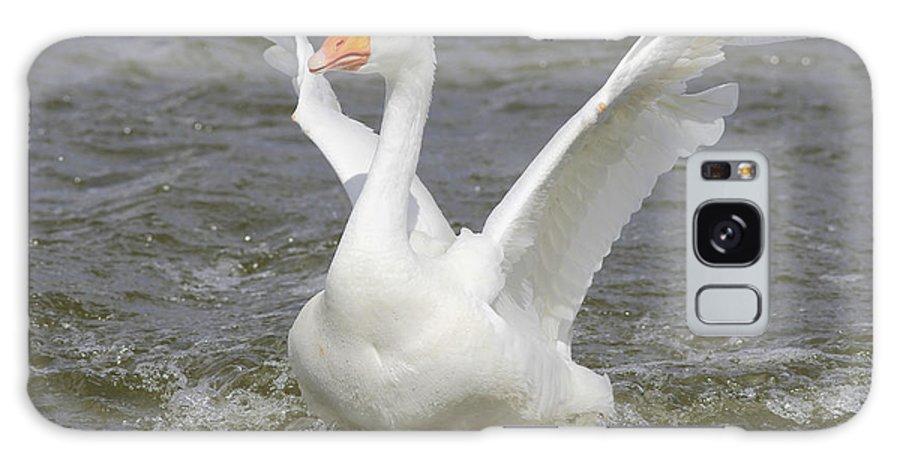 Goose Galaxy S8 Case featuring the photograph White Goose by Deborah Benoit
