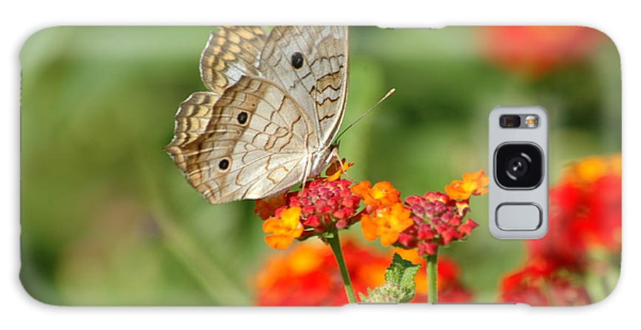 Butterfly Galaxy S8 Case featuring the photograph White Peacock Butterfly by Carolyn Marshall