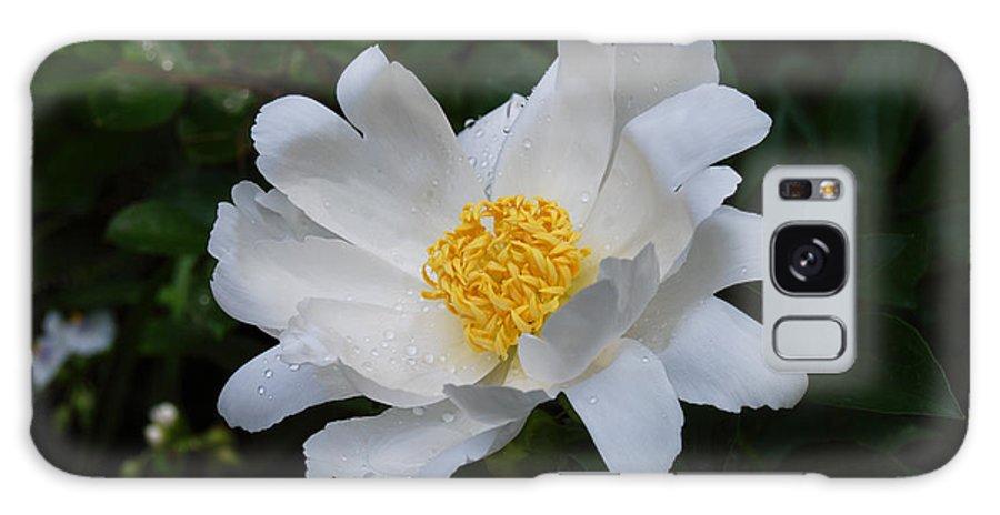 White Peony Flower Galaxy S8 Case featuring the digital art White Peony Flowers Series 4 by Eva Kaufman