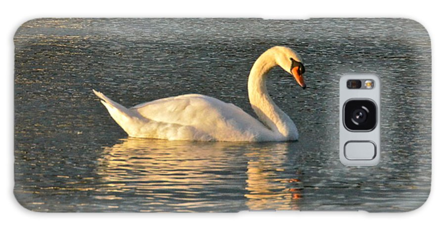 Swan Galaxy S8 Case featuring the photograph White Swan At Sunset by Carol Bradley