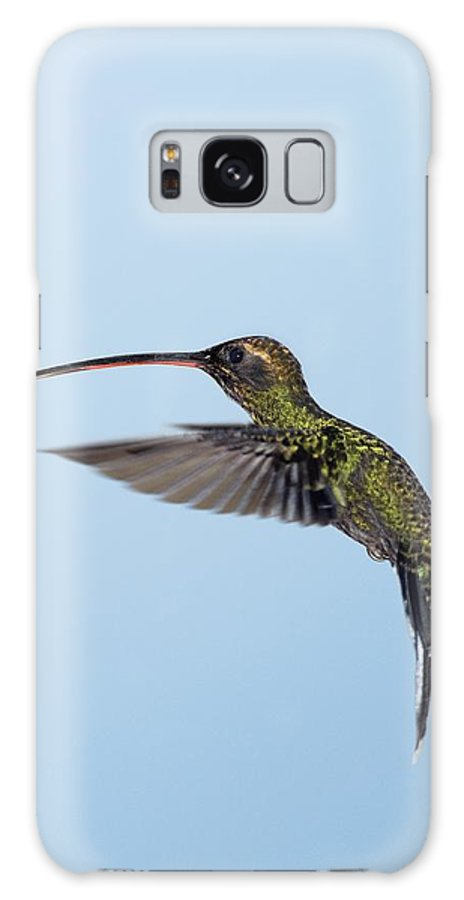 Phaethornis Yaruqui Galaxy S8 Case featuring the photograph White-whiskered Hermit Hummingbird by Tony Camacho