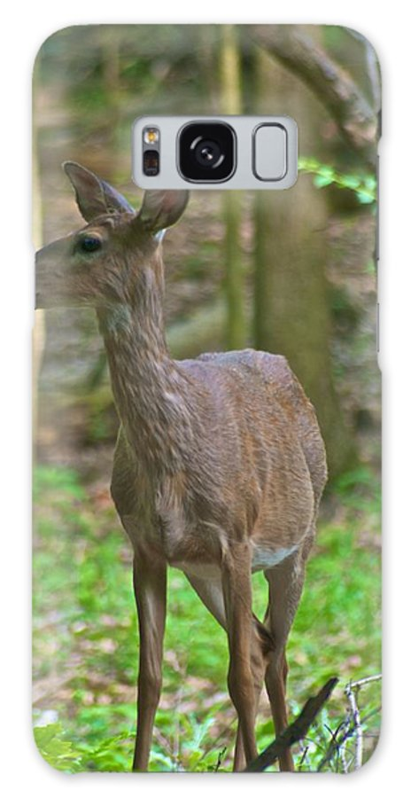 Animal Galaxy S8 Case featuring the photograph Whitetail 7338 by Michael Peychich