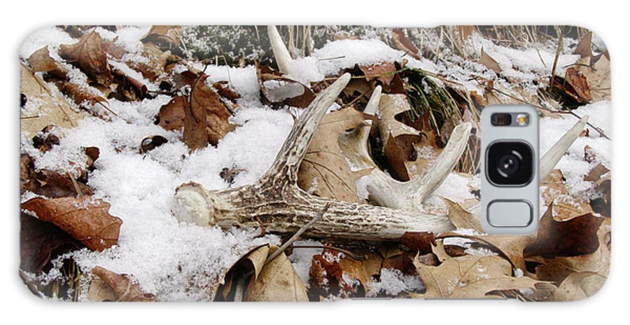Whitetail Deer Galaxy S8 Case featuring the photograph Whitetail Deer Antler - Half Of 10 by Angie Rea