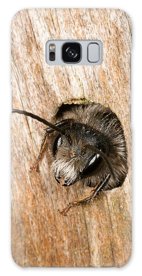 Andrena Galaxy S8 Case featuring the photograph Who Goes There by Bob Kemp