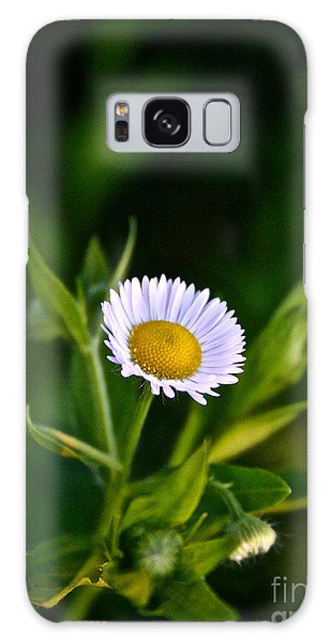 Garden Galaxy S8 Case featuring the photograph Wild Daisy by Susan Herber