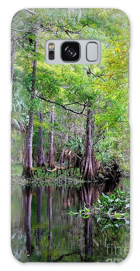 Cypress Trees Galaxy S8 Case featuring the photograph Wild Florida - Hillsborough River by Carol Groenen