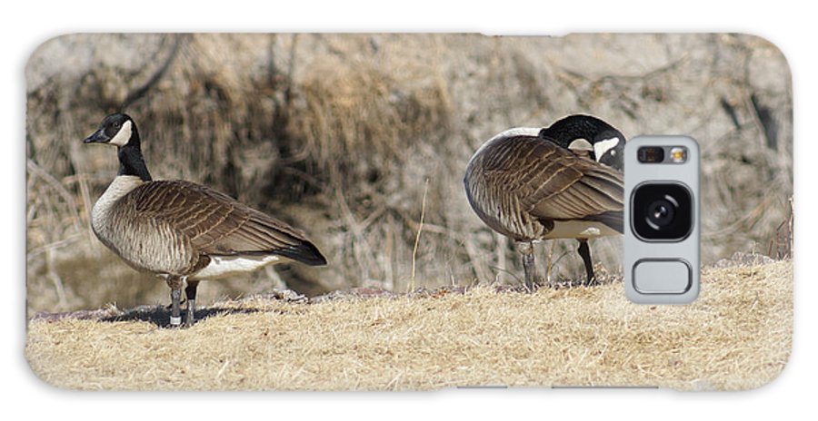 Goose Galaxy S8 Case featuring the photograph Wild Geese Pair by Lori Tordsen