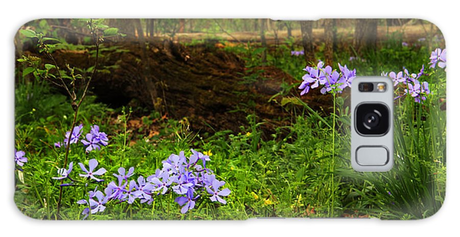 Wild Phlox Galaxy S8 Case featuring the photograph Wild Phlox In The Woodlands by Greg Matchick
