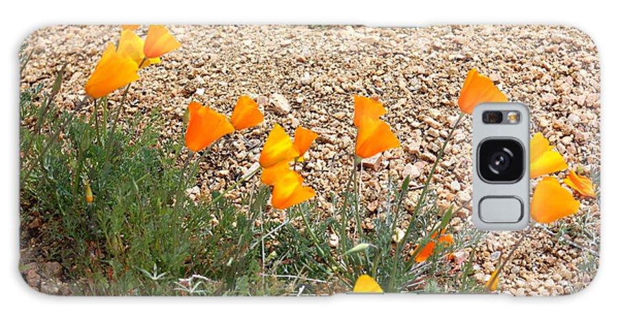 Poppies Galaxy S8 Case featuring the photograph Wild Poppies by Kim Galluzzo Wozniak