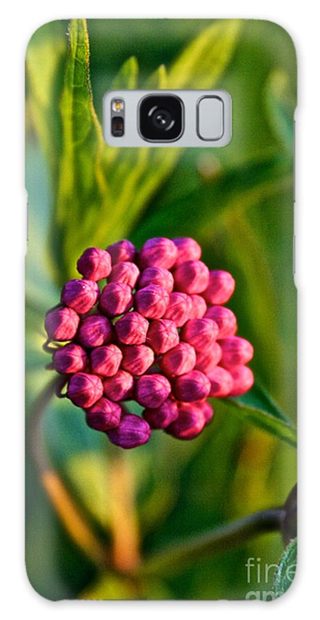 Garden Galaxy S8 Case featuring the photograph Wild Weed by Susan Herber