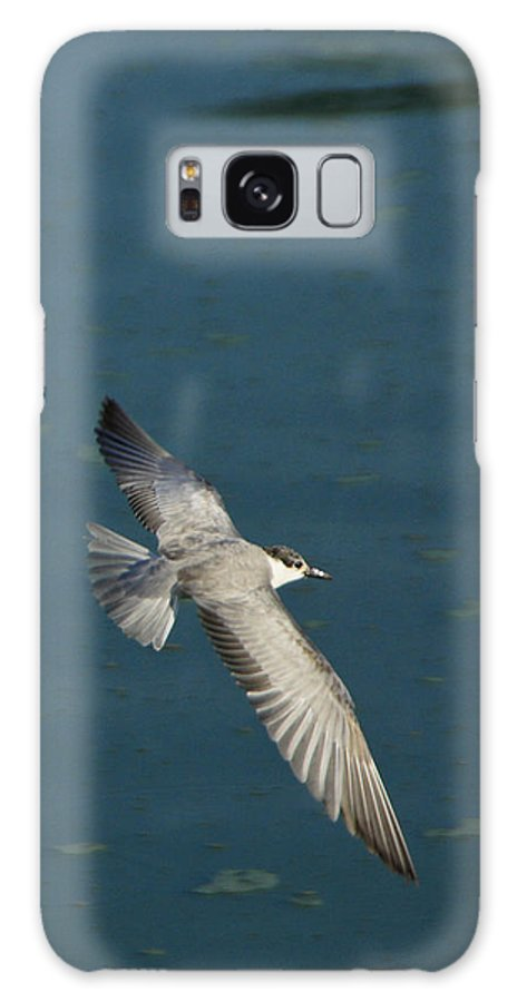 Asia Galaxy S8 Case featuring the photograph Wings Over Water by Michele Burgess