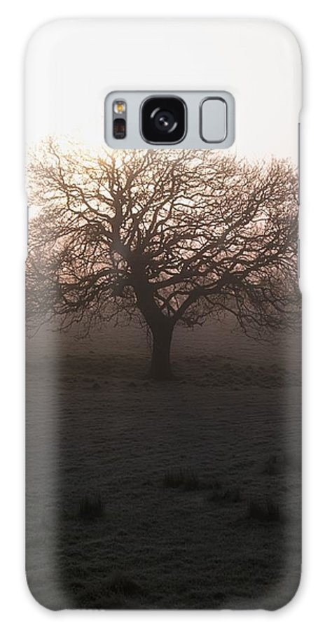 Ireland Galaxy S8 Case featuring the photograph Winter Tree On A Frosty Morning, County by Gareth McCormack