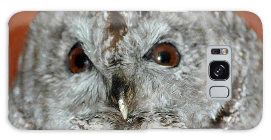 Owl Galaxy S8 Case featuring the photograph Wise Owl by LeeAnn McLaneGoetz McLaneGoetzStudioLLCcom