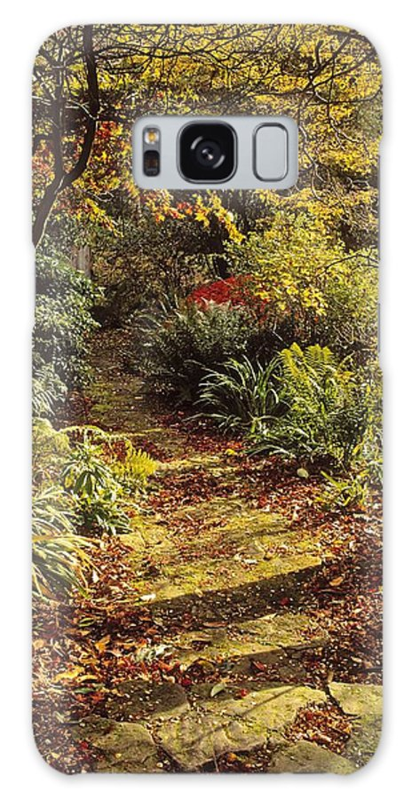 Mount Stewart Galaxy S8 Case featuring the photograph Woodland Path, Mount Stewart, Ards by The Irish Image Collection