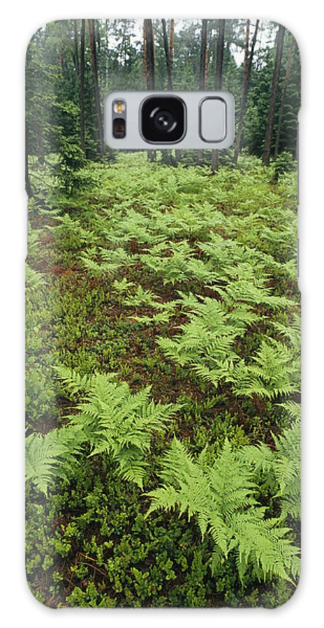 Plants Galaxy S8 Case featuring the photograph Woodland View In A Pine Forest by Klaus Nigge