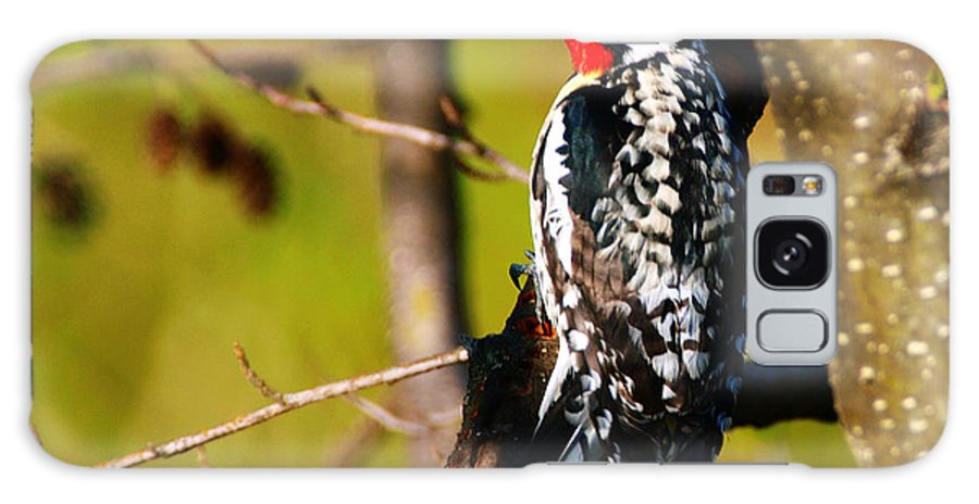 Woodpecker Galaxy S8 Case featuring the photograph Woodpecker by Paul Ge