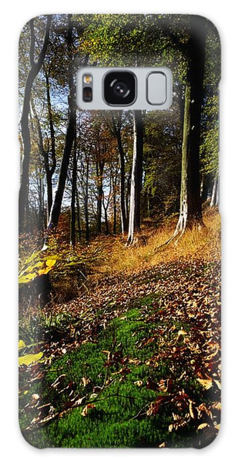 Color Image Galaxy S8 Case featuring the photograph Woods During Autumn by The Irish Image Collection