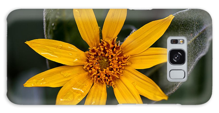 Woolly Mule's Ears Galaxy S8 Case featuring the photograph Woolly Mule's Ears by Mitch Shindelbower