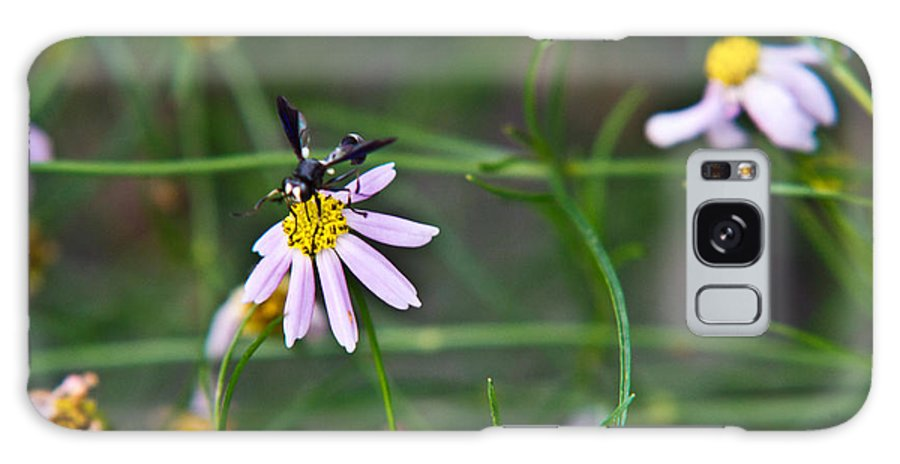 Yellow Galaxy S8 Case featuring the photograph Yellow Banded Black Winged Fly 1 by Douglas Barnett