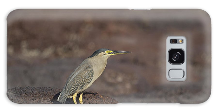 Striated Heron Galaxy S8 Case featuring the photograph Yellow Eyes V2 by Douglas Barnard