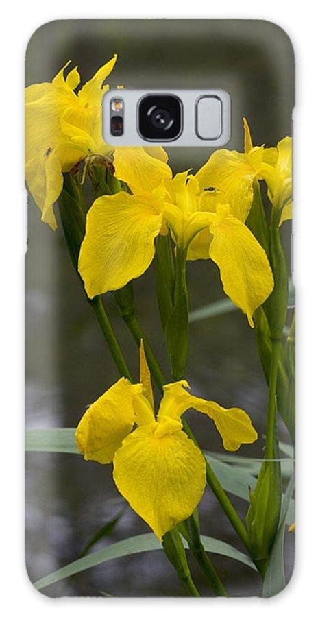Iris Pseudacorus Galaxy S8 Case featuring the photograph Yellow Flag Iris (iris Pseudacorus) by Bob Gibbons