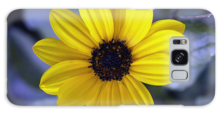 Flower Galaxy S8 Case featuring the photograph Yellow Flower 4 by Skip Nall