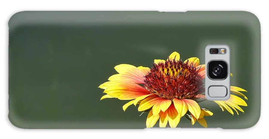 Yellow Galaxy S8 Case featuring the photograph Yellow Flower by Alan Hutchins