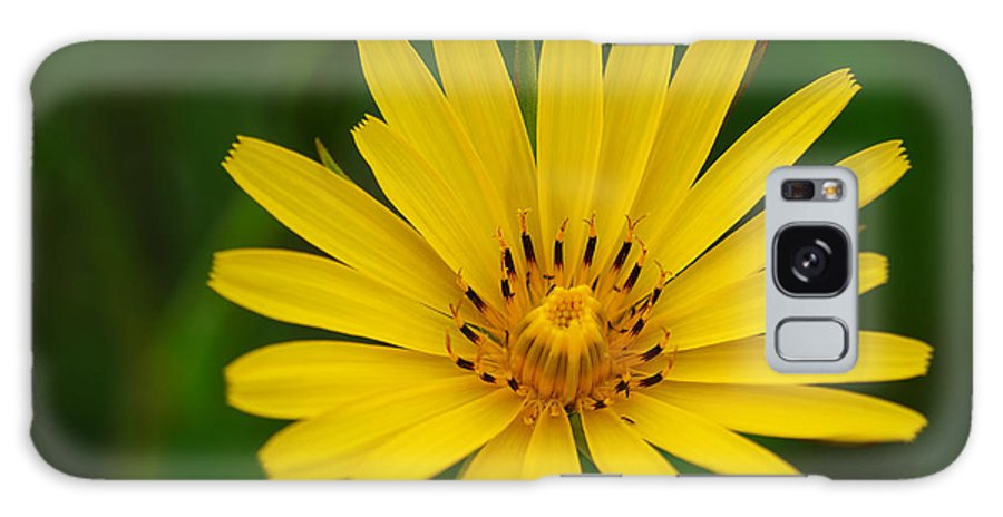 Flower Galaxy S8 Case featuring the photograph Yellow by Ivan Slosar