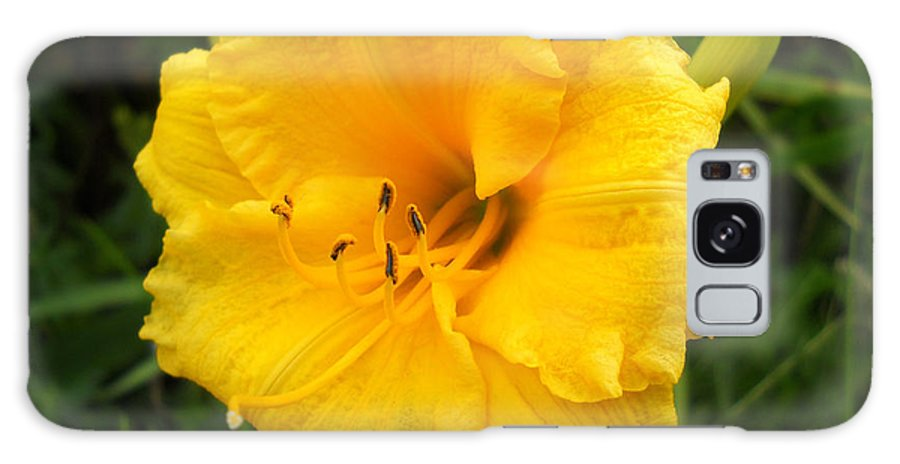 Flower Photo Galaxy S8 Case featuring the photograph Yellow Lily - Oshun by Duwayne Washington