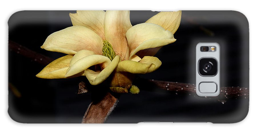 Nature Galaxy S8 Case featuring the photograph Yellow Magnolia - 1 by Robert Morin
