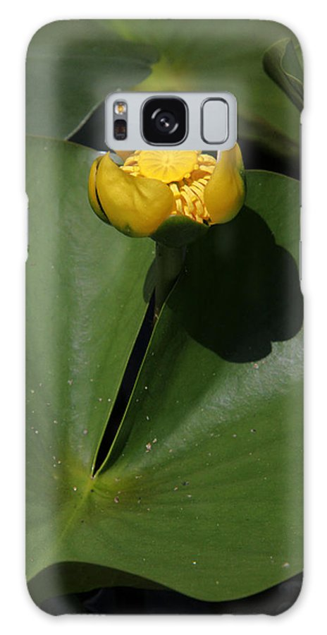 Yellow Pond Lily Galaxy S8 Case featuring the photograph Yellow Pond Lily by Doris Potter