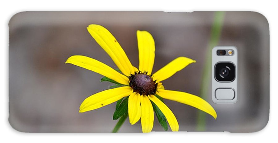 Reaching Galaxy S8 Case featuring the photograph Yellow Star by Maria Urso