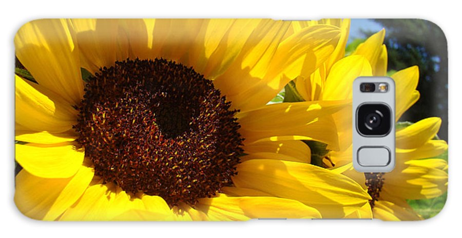 Sunflower Galaxy S8 Case featuring the photograph Yellow Sunflowers Art Prints Summer Sunflower by Baslee Troutman