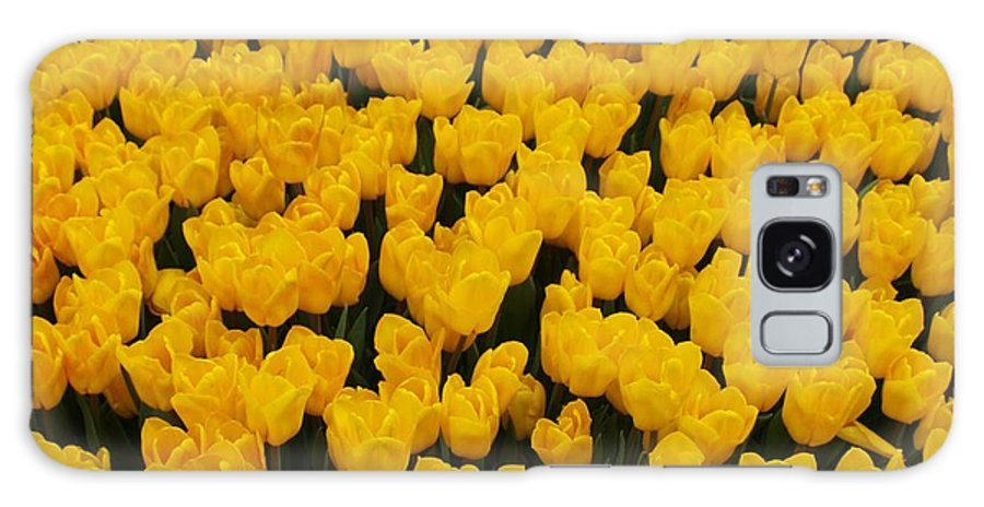 Flowers Galaxy S8 Case featuring the photograph Yellow Tulips by Larry Krussel