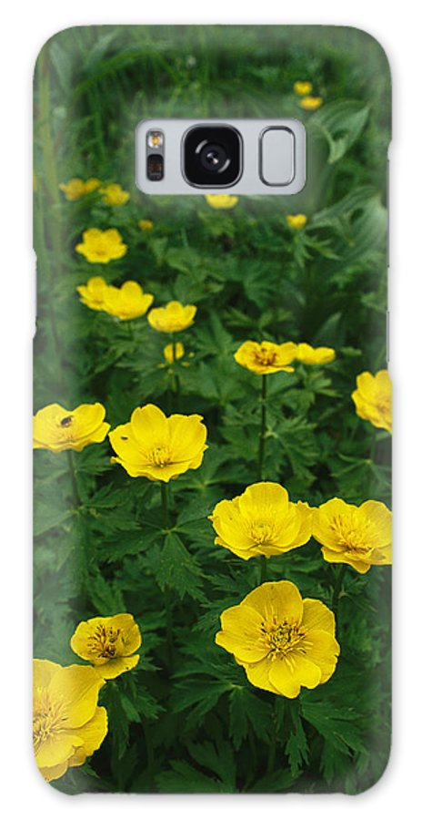 Commonwealth Of Independent States Galaxy S8 Case featuring the photograph Yellow Wildflowers Blooming In Lush by Klaus Nigge