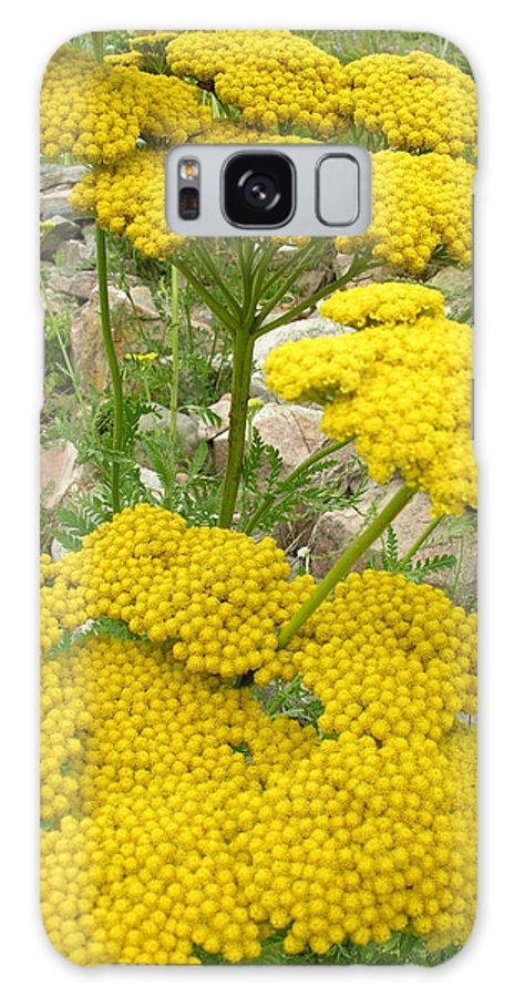 Flowers Galaxy S8 Case featuring the photograph Yellow Yarrow by Robert P Hedden