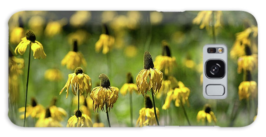 California Galaxy S8 Case featuring the photograph Yosemite Coneflowers by Peter Tellone
