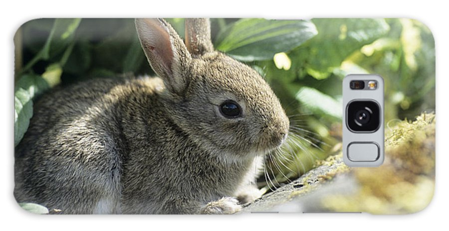 Oryctolagus Cuniculus Galaxy S8 Case featuring the photograph Young European Rabbit by David Aubrey