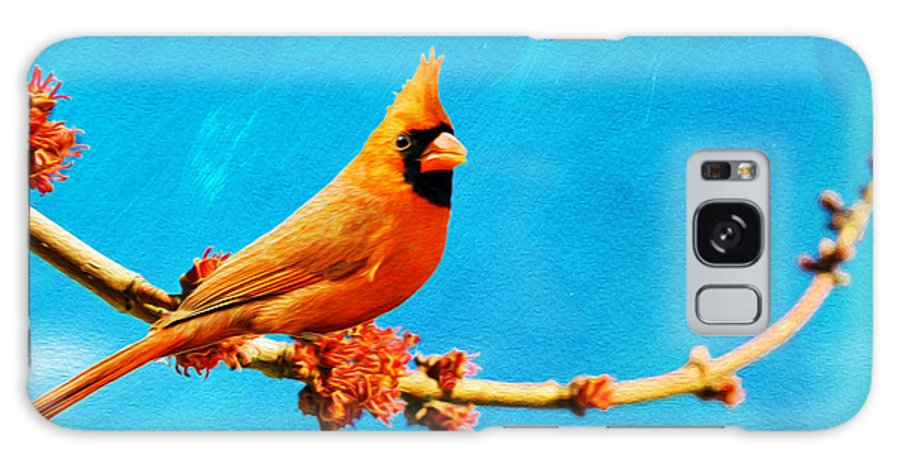 Northern Cardinal Galaxy S8 Case featuring the photograph Male Northern Cardinal Perched On Tree Branch by Laura D Young