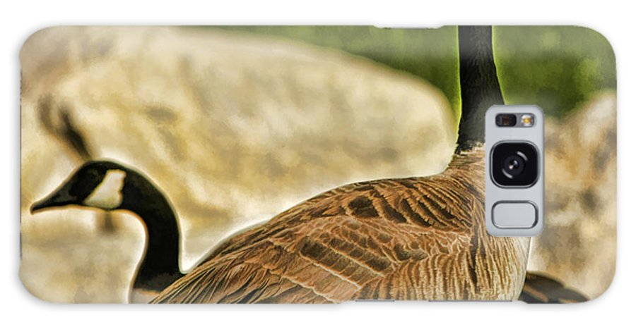 Birds Galaxy S8 Case featuring the photograph Two Geese by Blake Richards