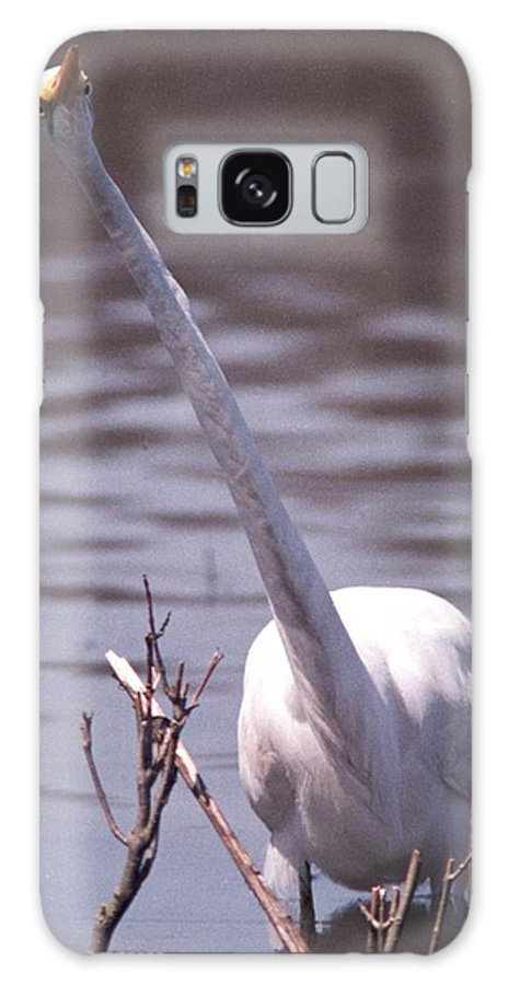 Egret Galaxy S8 Case featuring the photograph 070406-9 by Mike Davis
