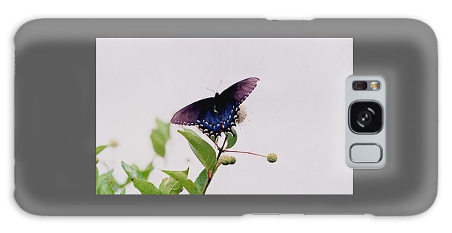 Butterfly Galaxy S8 Case featuring the photograph 080706-5 by Mike Davis