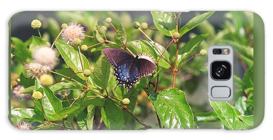 Butterfly Galaxy S8 Case featuring the photograph 080706-6 by Mike Davis