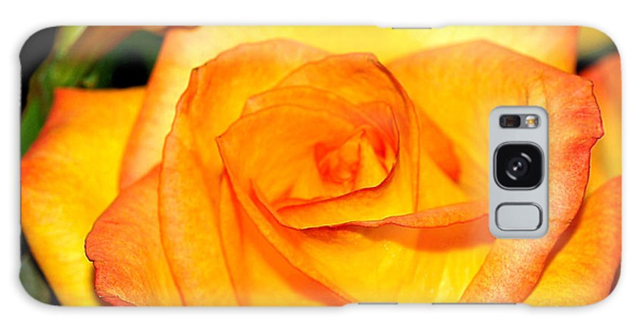 Fine Art Photography Galaxy S8 Case featuring the photograph A Rose Is A Rose by Patricia Griffin Brett